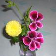 ゼラニウムと菊の花