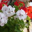 可愛い花だよぉ~^^