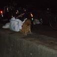 夜の海岸に戯れるネコちゃん