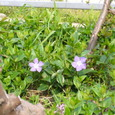 紫の花080402